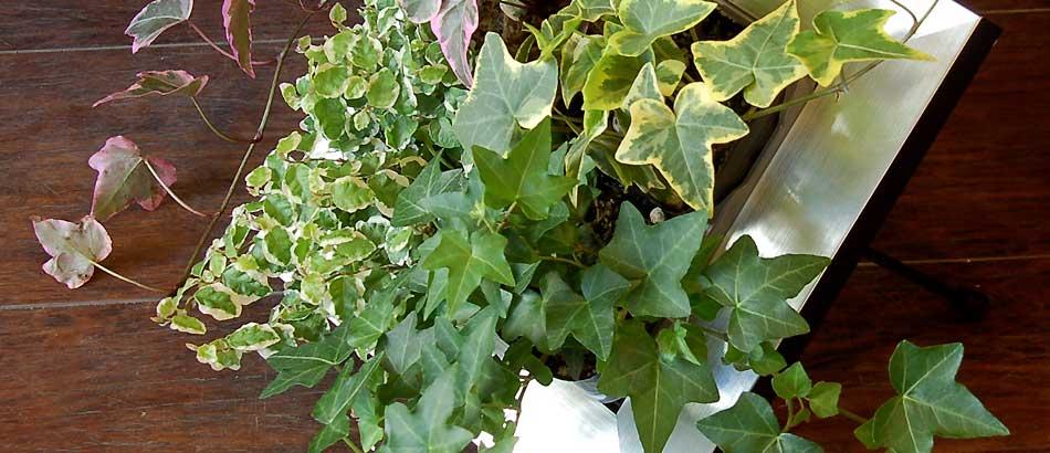 スタンドタイプの額に入った観葉植物