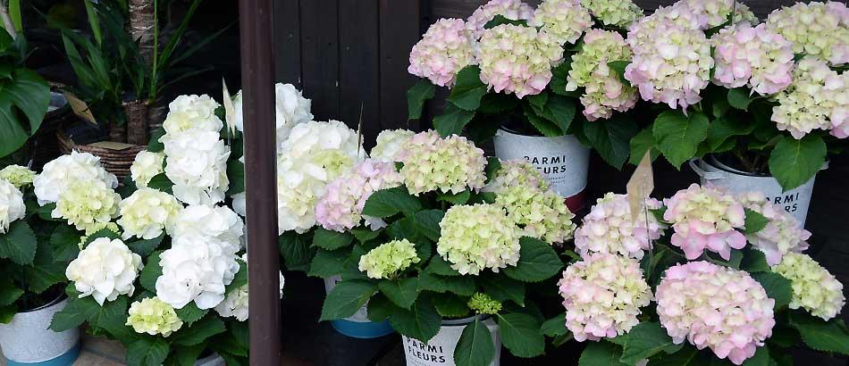 ハイドラな花たち