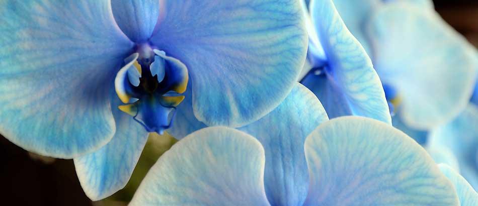 父の日にブルーな花を
