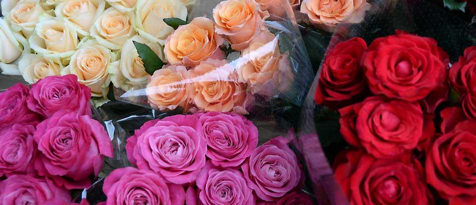 きれいなバラを