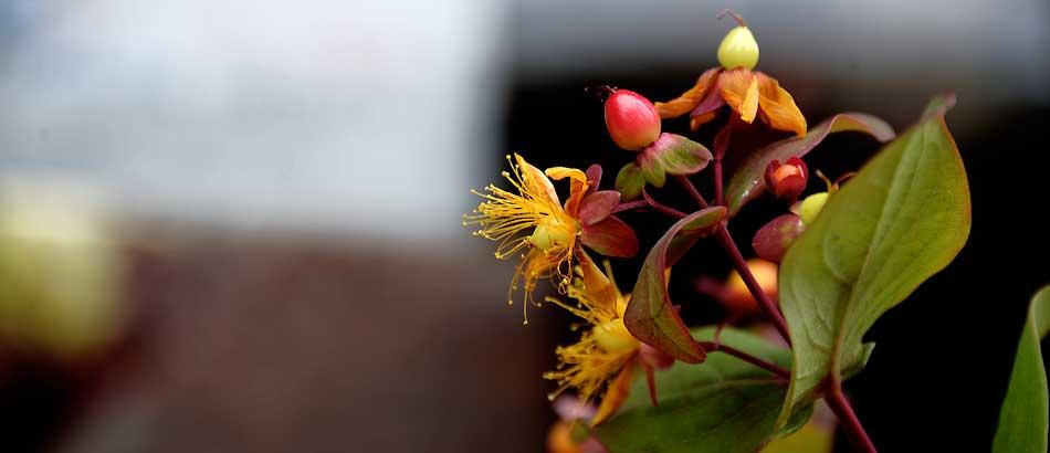 秋色な花たち