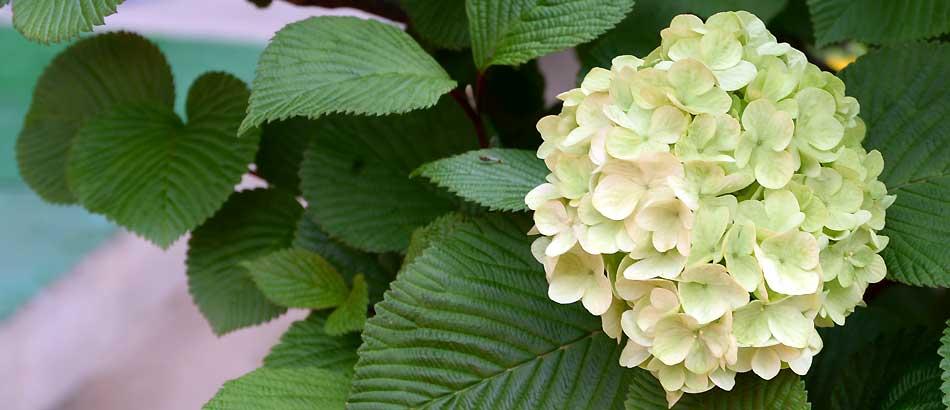 マイガーデンの花