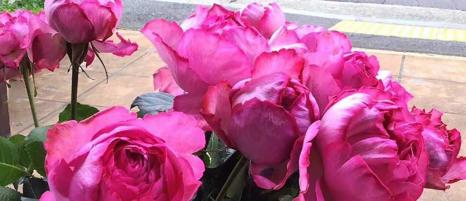 バラが旬の今、イチ押しの商品『イブ.ピアジェ』