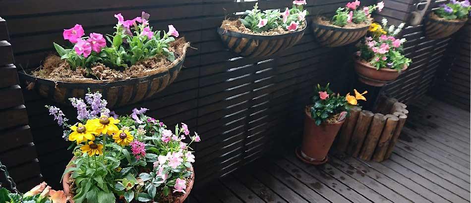 秋冬ものの苗が終わり、夏らしいベランダガーデンになりました。