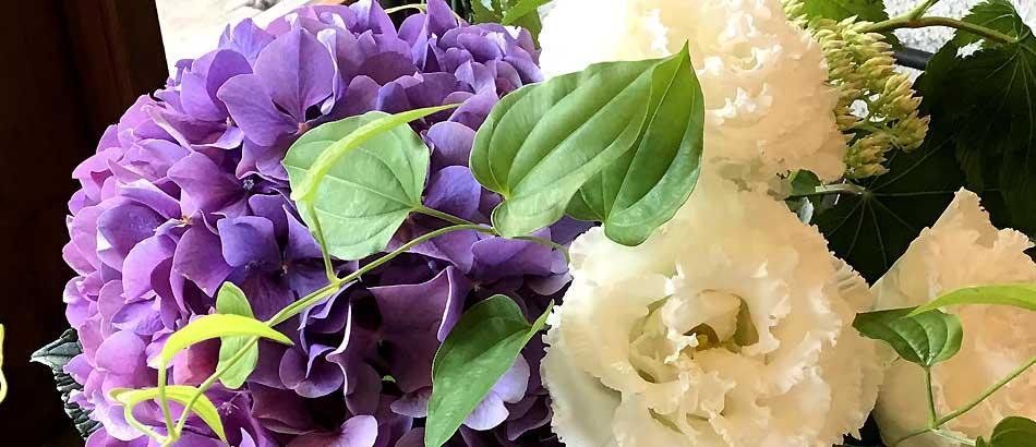 シュガーホワイト(トルコキキョウ) と紫陽花