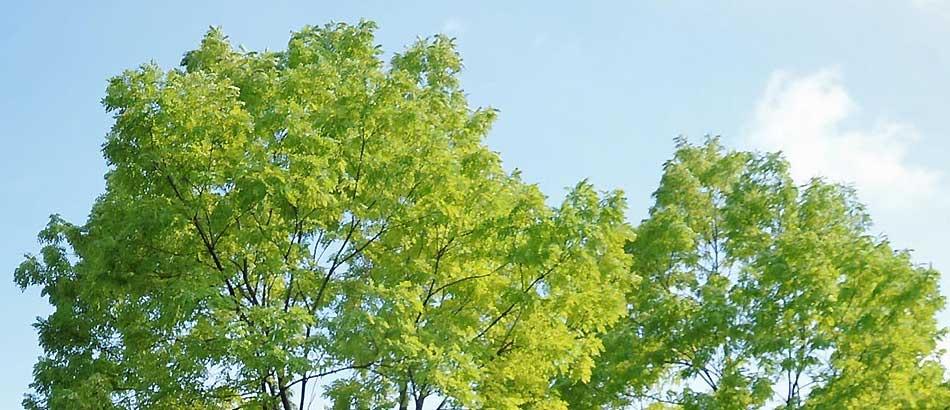 8月15日 本日は終戦記念日です。本日から19日(木)までお休みをいただきます。
