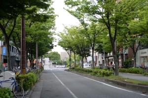 武庫之荘駅前の欅並木