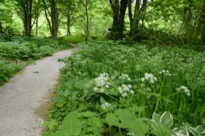 木立の中の細道