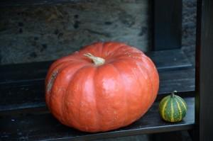かぼちゃ 2