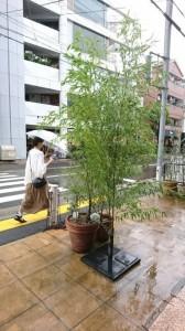 七夕の笹 店頭